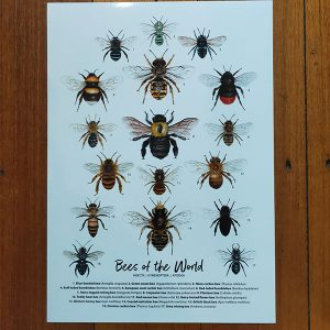 Explore Nature Art Prints Bees of the world